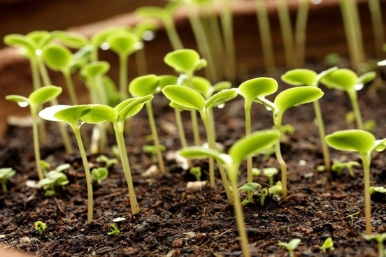 How we can derive energy from plant life