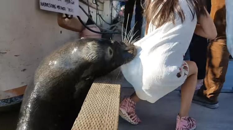 random news: Girl gets pulled into water by a sea lion!