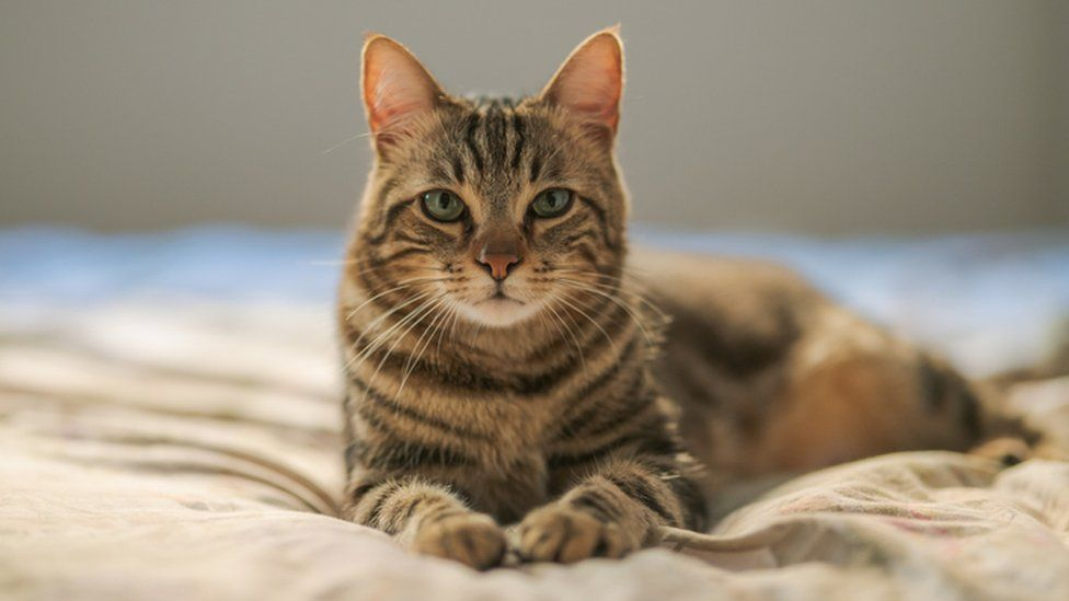 Taking Care of Your Cat:A Simple Guide